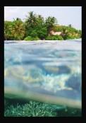 Oris Maldives Limited Edition