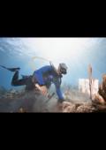 Oris Carysfort Reef Limited Edition