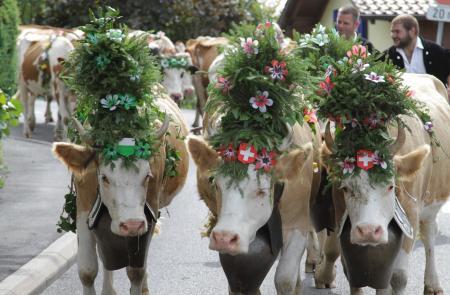 La traditionnelle Désalpe des vaches de Jean-Claude Biver